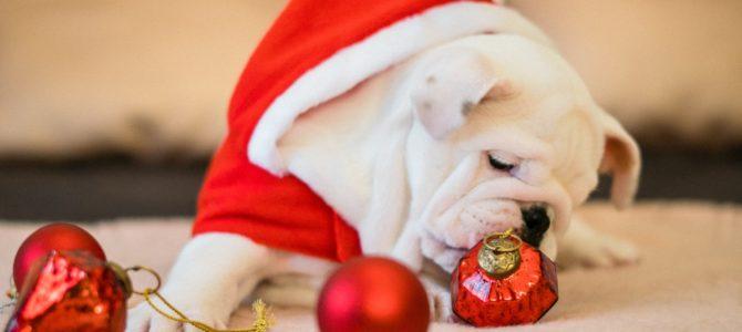 Godziny pracy lecznicy w okresie świąteczno-noworocznym